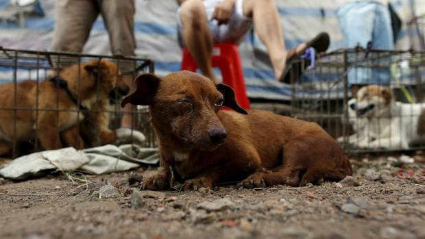 Dogs for sale at the dog meat festival in Yulin, Guangxi Autonomous Region, in June 2015.