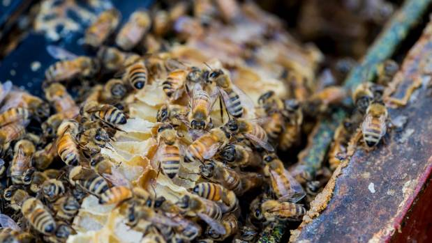 There have been concerns about what constitutes real manuka honey.