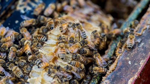 Research into the way bees dance could be helpful for treating jetlag in post-op patients, according to new research.