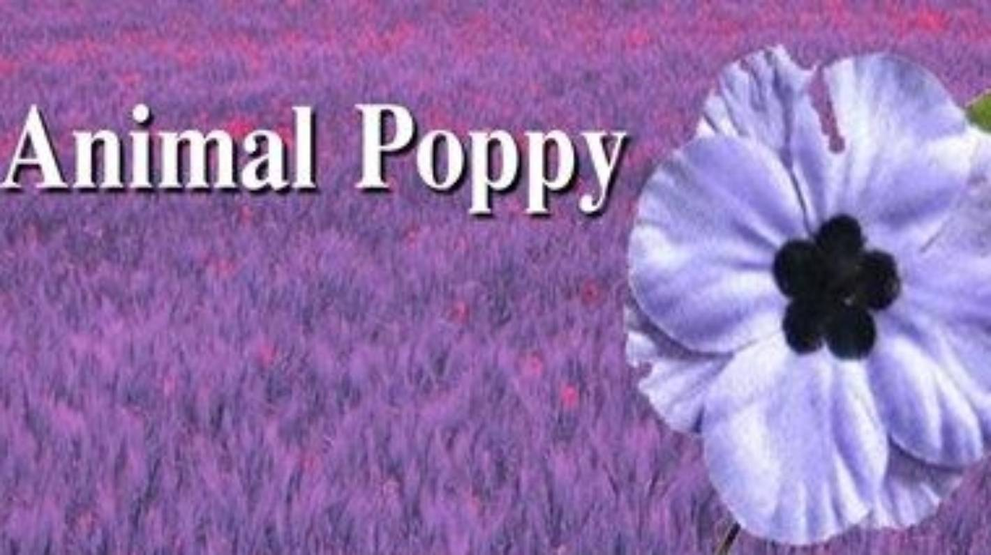 Red White Purple What Colour Of Poppy Do You Wear Stuff