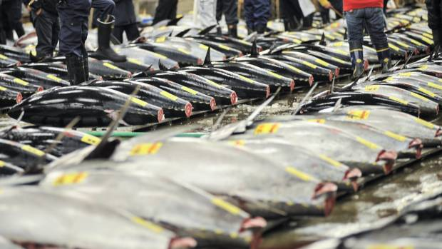 $632000 Tuna Sold at Tokyo Auction