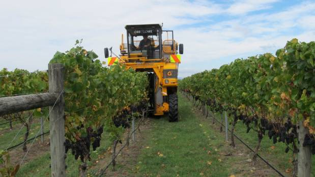 A harvester at work at Matahiwi. All but the reserve wines are machine picked.