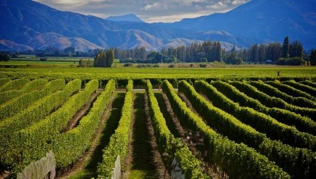 The Marlborough region will remain the epicentre of the wine industry.