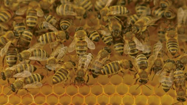Honeylab is running the world's largest programme of medical honey research.