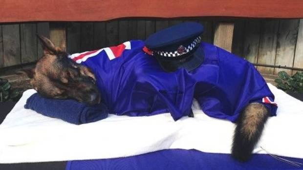 Kiwis' hearts went out to Constable Josh Robertson, dog handler of slain Gazza. The police dog was wrapped in a New ...