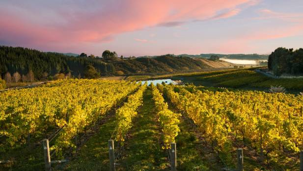 New Zealand's vineyard area is tipped to rise 6 per cent on present plantings by 2018.