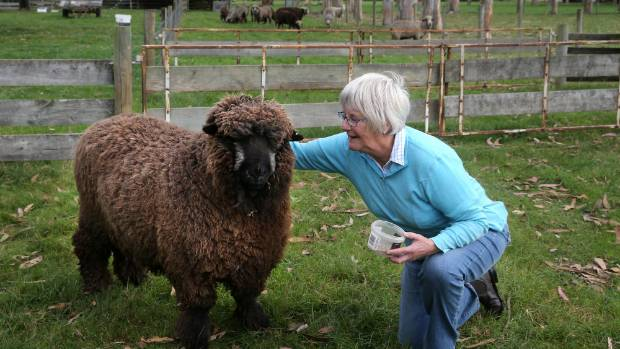 """Phillippa Sanders has been breeding black and coloured sheep since 2009. She considers herself a """"newbie."""""""