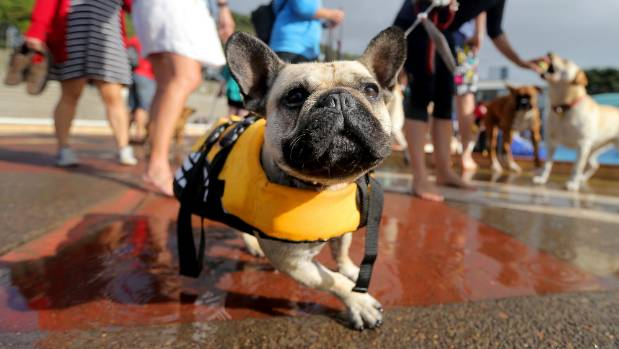Pooches Have Pool Party On Last Day Of Outdoor Pool In New