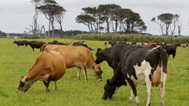 Dairy farms sales have slumped this year, but Federated Farmers is picking an increase come winter.