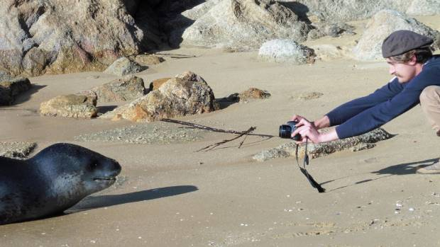 A tourist gets up close and personal with a lepoard seal at Breaker Bay in Kaiteriteri on Sunday.