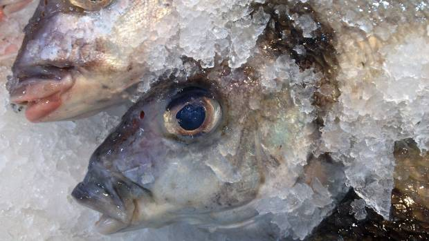Trial begins over false reporting of fish caught.