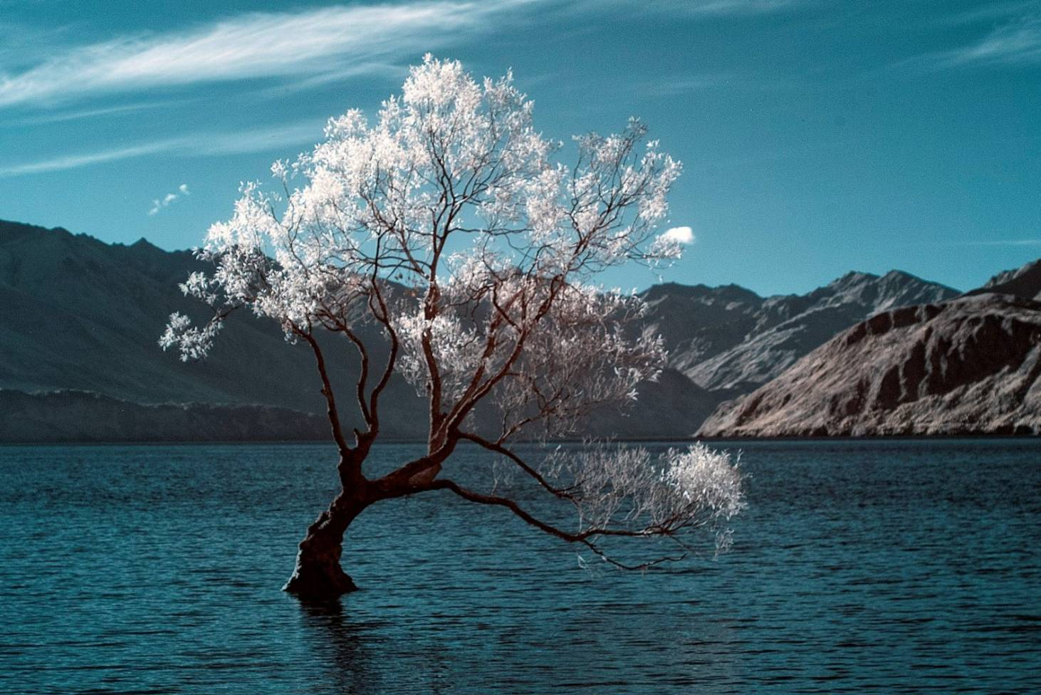 That Wanaka Tree - the little fence post determined to live | Stuff.co.nz