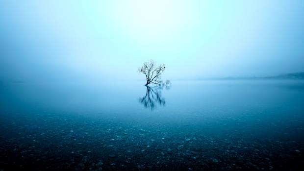 """""""The Lone Tree'' by Christchurch photographer Dennis Rademacher was taken in June 2014 and won the New Zealand ..."""
