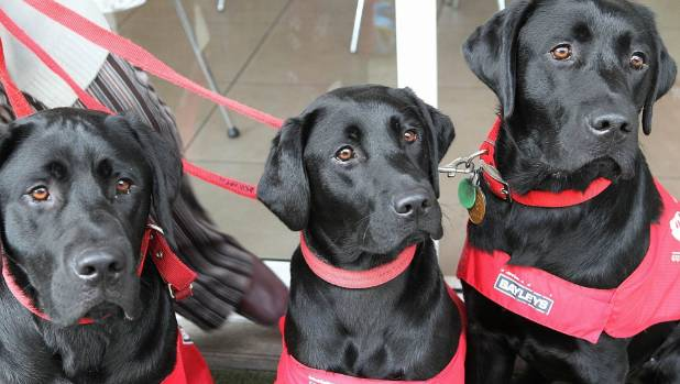 One donation will allow 20 new guide dogs to be trained at a cost of $50,000 each.