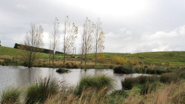 Eileen and Shane Walker have planted flaxes and toitois alongside their wetlands.