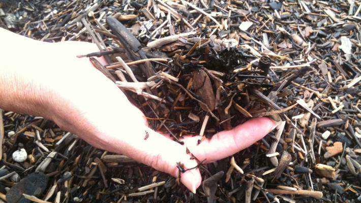 Mulch Improves The Structure Of Heavy Clay Soils