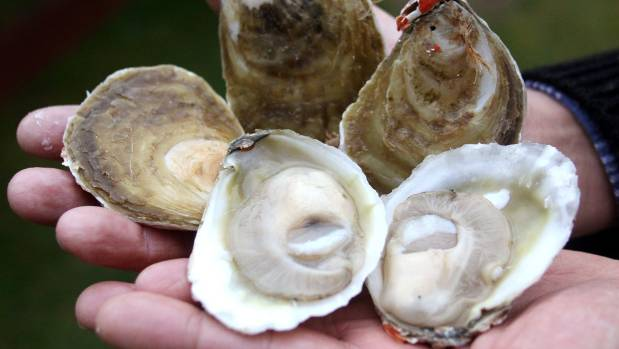 Five of the best places to get Bluff oysters in Auckland