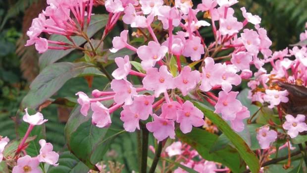 Camellia, el más bonito arbusto con flores - GardenSite.es