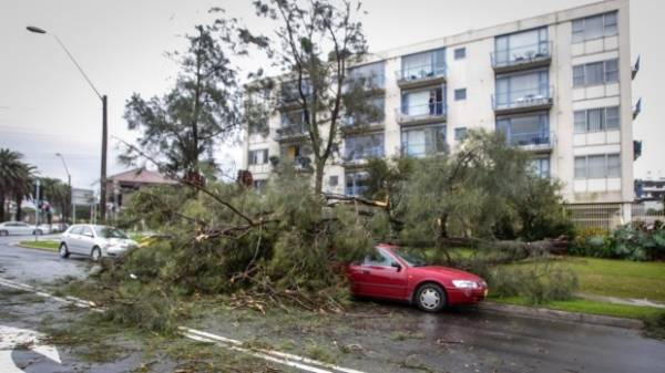 The SES have received more than 700 calls about fallen trees and branches.