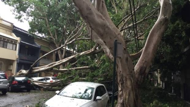 Heavy rain and strong winds brought down a tree in Paddington, Sydney.