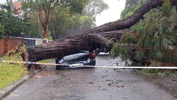 A tree has come down in storms in Sydney, crushing a car in the suburb of Annandale.