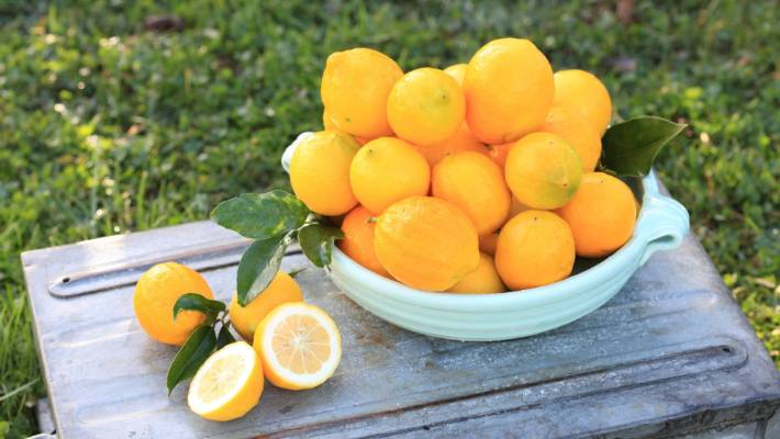 50 favourite fruit trees to grow at home | Stuff co nz