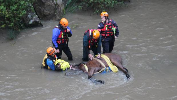 Rescuers comfort an anaesthetised horse in the Otaki River.