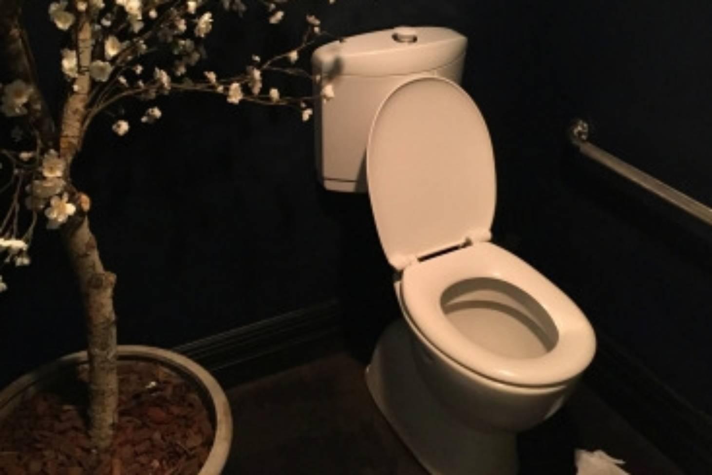 Bog blog puts Kiwi toilets to the test | Stuff co nz