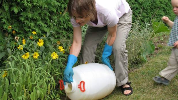 Applying dilute urine in the garden.