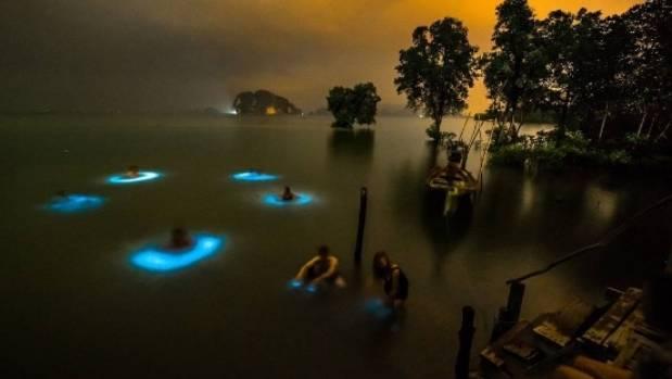 Bioluminescent plankton africa