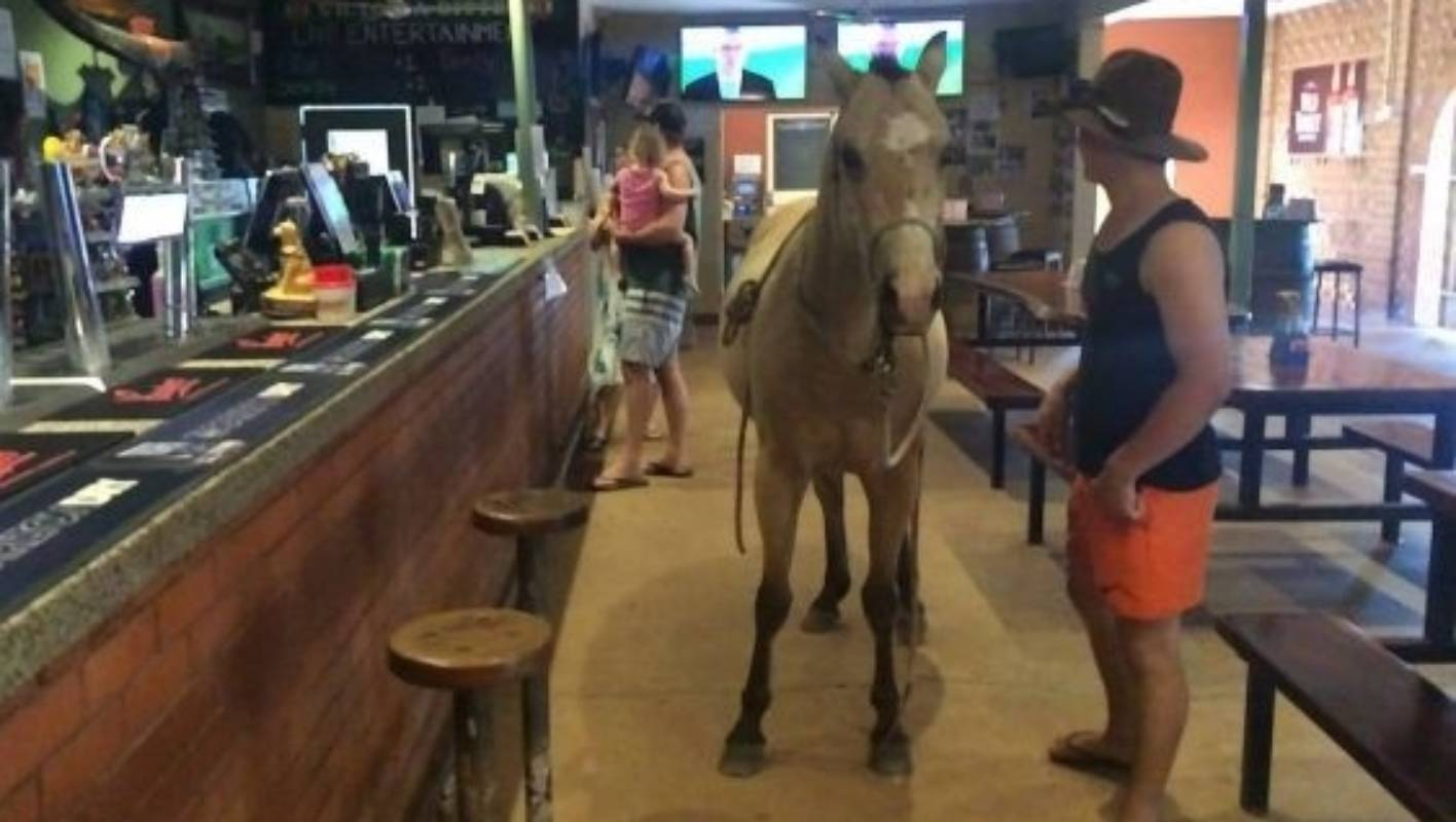 A Cow A Donkey And A Pony Walk Into The Humpty Doo Hotel