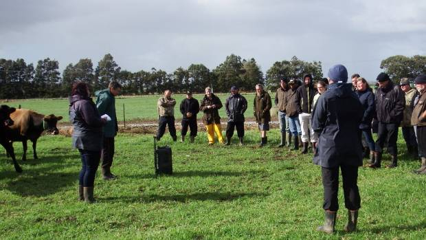 Northland farmers last month discussing pasture management. Grass growth may appear to be good in a mild winter, but it ...