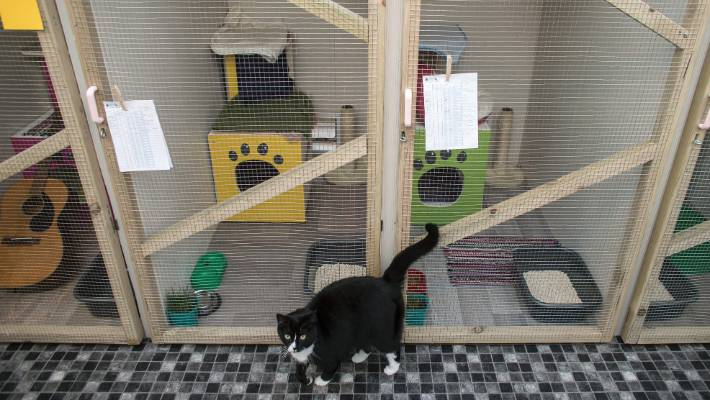 cats on vacation cattery has been open for just a month and already has bookings for