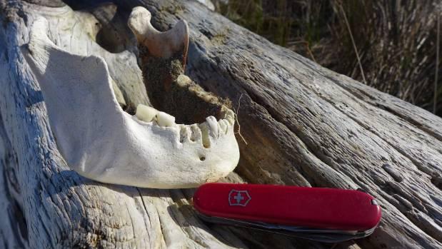 Human Jawbone Found Near Nelson Historic Say Police