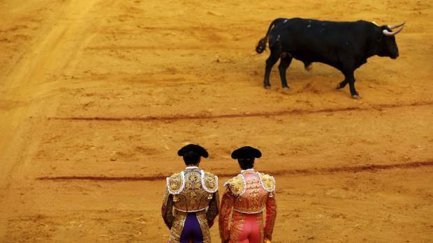 According to Spanish tradition, the mother of a bull that kills a matador is slaughtered.