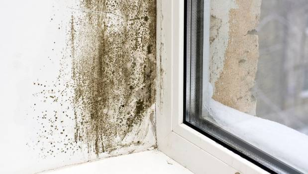 Almost a third of all renters have moved out of a house because it is damp, cold and/or mouldy.