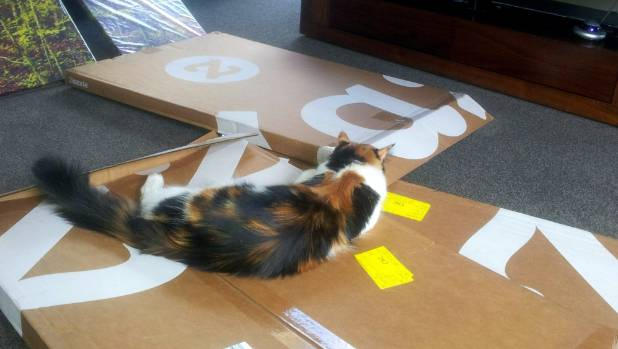 A classic move from the cat playbook: Maggie turns a pile of boxes into a day bed.