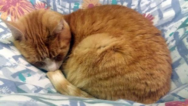 Smoo tucks herself in for a long-haul sleep.