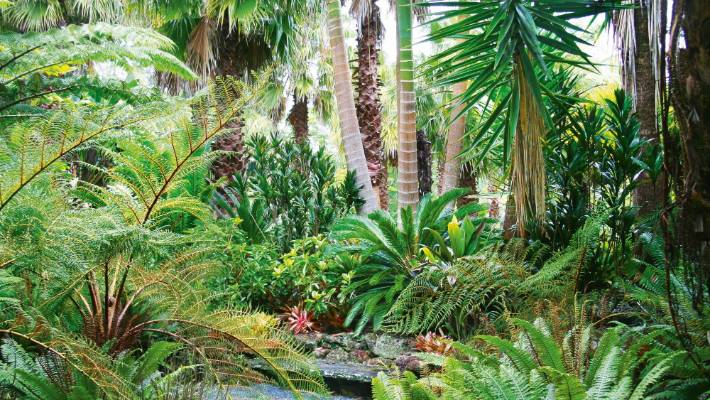 8 Top Plants To Add Tropical Texture To A Nz Garden