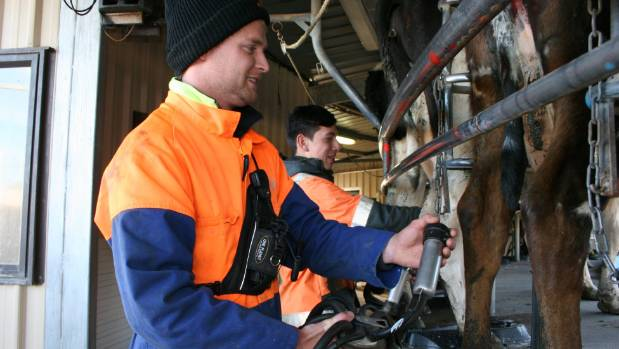 Farm manger Glenn Weitenberg and  farm assistant Beau McLeod in the milking shed.