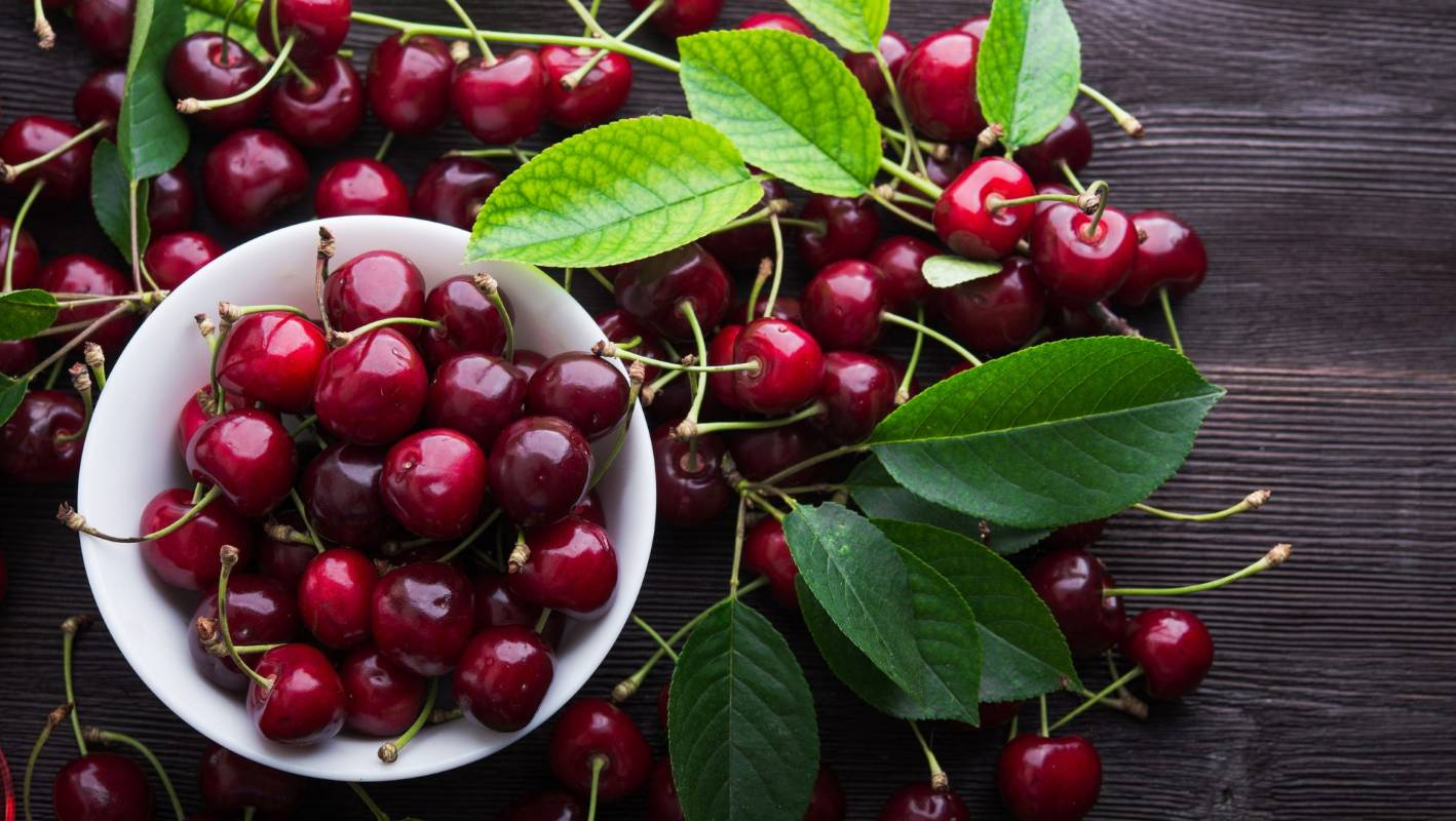 How To Grow And Harvest Cherries In Nz