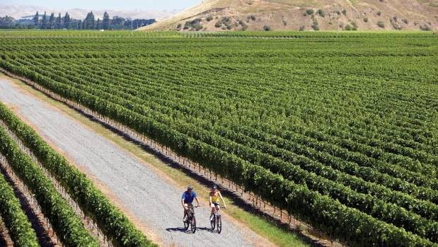 Winemakers across Hawke's Bay's famed Gimblett Gravels grape-producing area are dealing with the headache of rain at ...