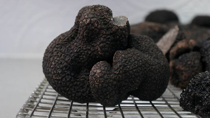 Freshly-harvested French black truffles at The Truffle Farm in Majura, ACT.
