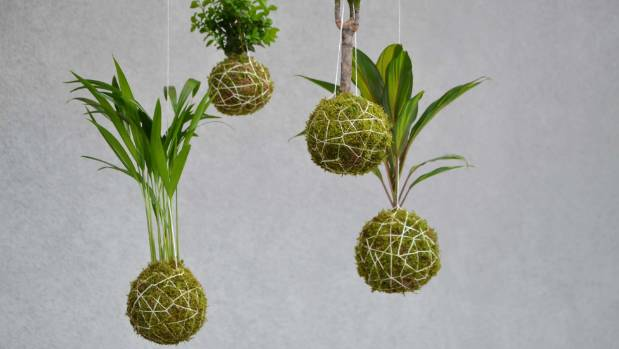 Hang your kokedama at different points for vertical interest