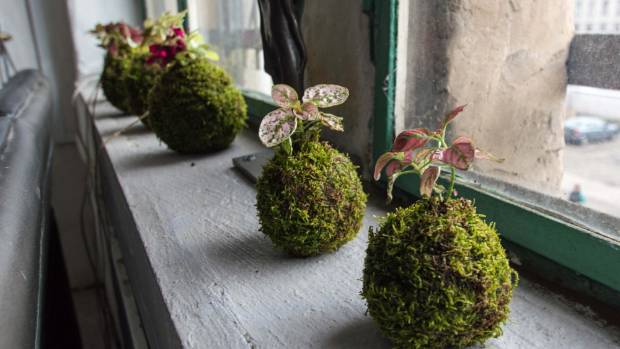 These kokedama make a great windowsill display