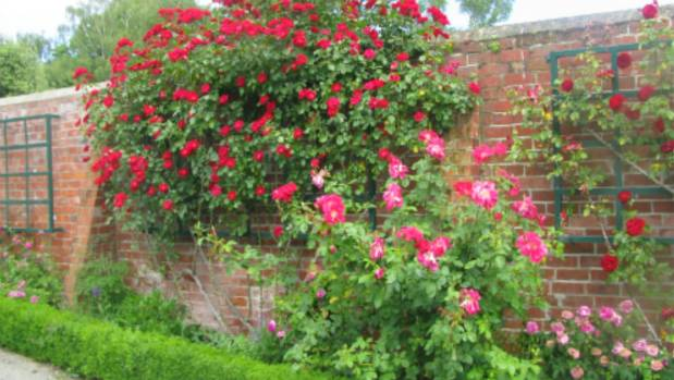 Christchurch city council to redesign mona vale rose wall for Grow landscapes christchurch