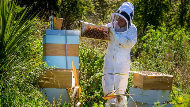 New Zealand bees and beehives are in rude health, although beekeepers cannot afford to be complacent.