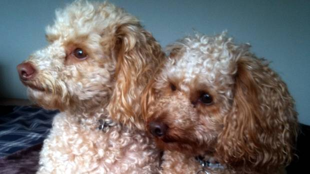 In the Synchronised Cuteness event, Noodle and Toodle won the gold moodle - er, medal.