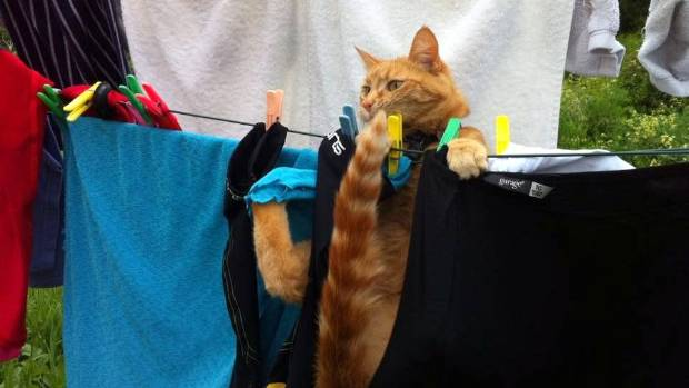 Gwen again, this time in the Clothesline final. She nailed her routine with a four-paw dismount.