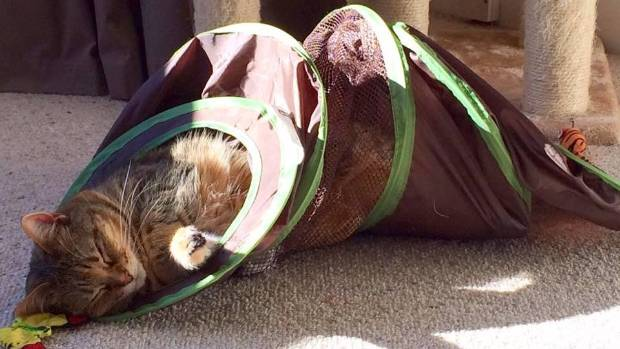 Syveta failed to defend her Cat Tunnel title, due to an untimely loss of focus.